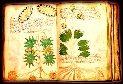 Manuscrito Voynich 004